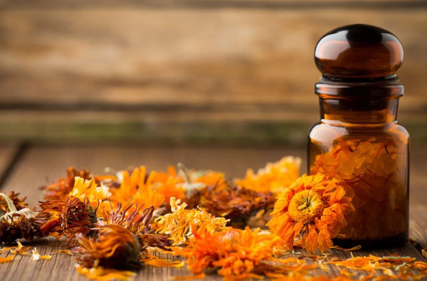 сухие цветки каледулы Homeopathic medicine, calendula dry flowers and wooden surface.